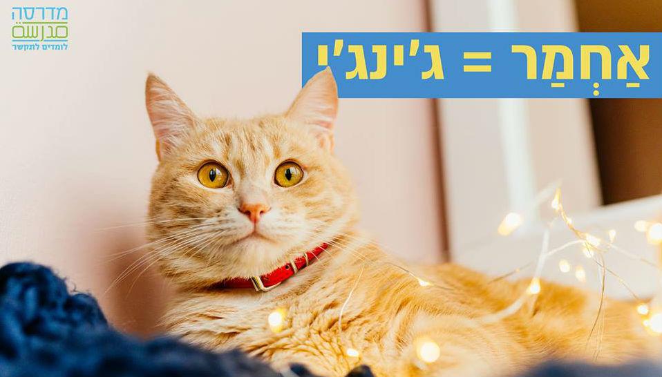פתאום כולם רוצים ללמוד ערבית מדוברת – פודקאסט